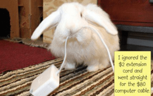 Rabbit destroying phone cable
