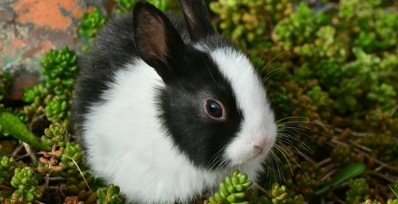 12 Things You Might Not Know About Rabbits